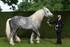Le dresseur de chevaux