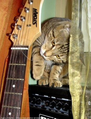 chat guitare