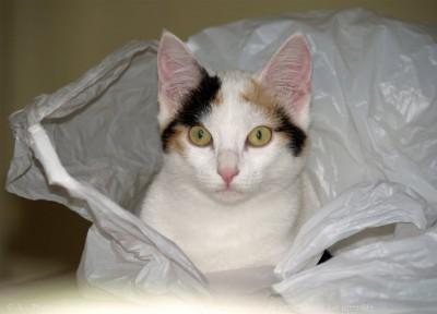 chat sac