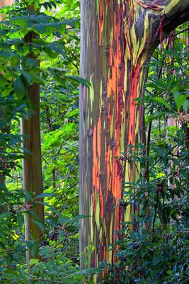 arbre bonsai extérieur