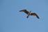 Photos d'oiseaux en vol