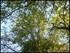 Photos: Les arbres vus du dessous