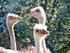 Zoo de Beauval - Une Histoire De Cou Les