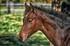Massacres et mutilations de chevaux en F