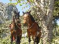 chevauxpassion06