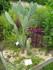 Lauris, le jardin des plantes