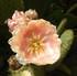 Lauris, le jardin des plantes tinctorial