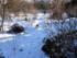 Chats et neige