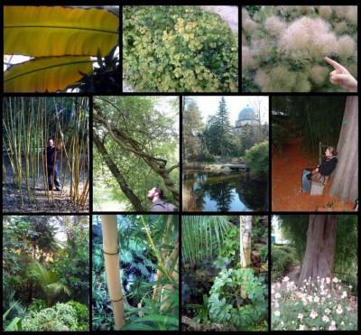 Blog de djou - Jardin botanique de l universite de strasbourg ...