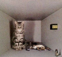 Fedora 19 alias Schrödinger's cat