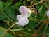 Mini orchidées