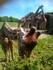 La Girafe (Snapchat)