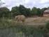 Les éléphants (Planète Sauv