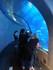 Tunnel sous-marin (Aquarium de