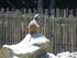 Le suricate (Planète Sauvage