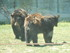L'Ours baribal (1/2)