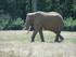 L'éléphant (Planète Sauvage