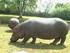 L'Hippopotame