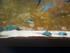 Les mini-raies (Aquarium Barcelone)