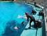Les dauphins (Planète Sauvage 2020)