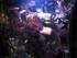 L'Océarium du Croisic 2020: les poissons