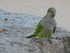 Les oiseaux du Parc Guëll (2/
