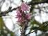 Les fleurs du Parc Oriental de