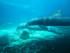 Les dauphins de la Cité sous-marine