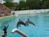 Le spectacle de dauphins