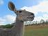 Le grand Koudou (Planète Sauvage 2017)