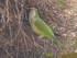Les oiseaux du Parc Guëll (1/2)