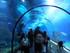 Aquarium de Barcelone: tunnel sous-marin