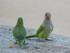 Les oiseaux du Parc Guëll (2/2)