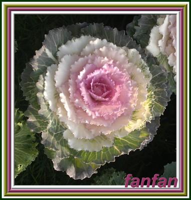 Bouquet Decoratif Rose Poudr Ef Bf Bd