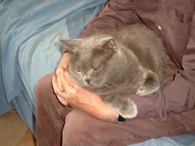 Une journée typique de mes chats! dans Mes animaux feline117888130018_gros
