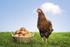 La poule ou l'oeuf ?