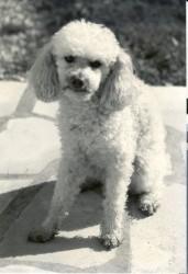 photo du chien