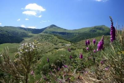 le Puy Mary vu du plateau du Limon