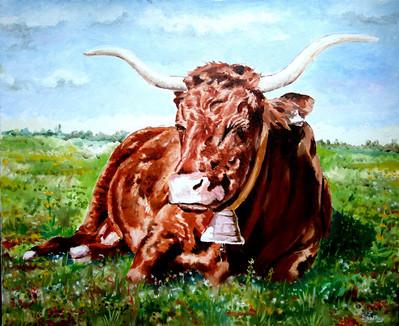 Vache Salers