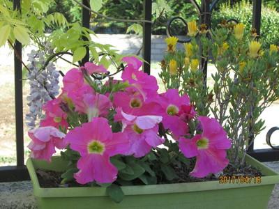 Decors De Fleurs Pour Petite Terrasse Beton