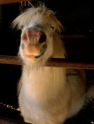 Prince du Jour, poney d'amour ! ^^