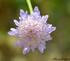 Jolie fleur sauvage