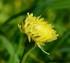 Fleurs jaunes