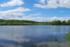 Potentille tormentille autour de l'étang