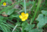 Fleurs jaunes d'été : les réponses