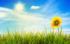 Analogie du soleil