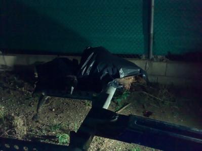 Regina, gentille chienne, violée et assassinée!