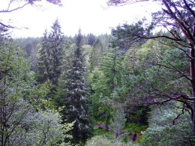 Forêt vers Lairg