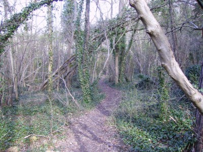 GR2 dans la forêt