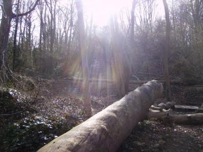 A contre jour dans la forêt